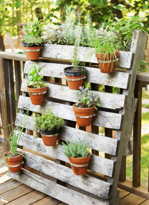 6 Tips for Planting a Container Garden