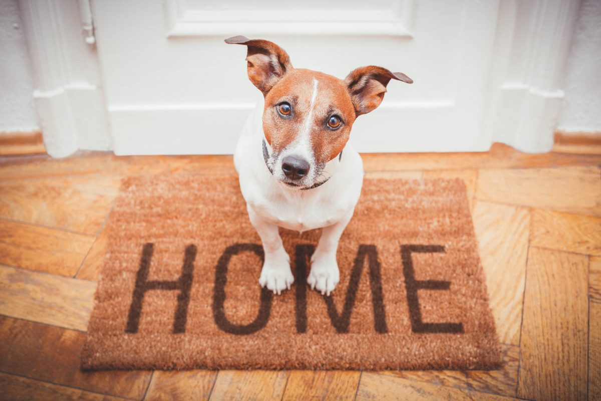 HOW TO SELL A HOME WITH PETS